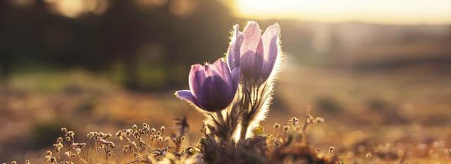 slider-bloem-opkomst